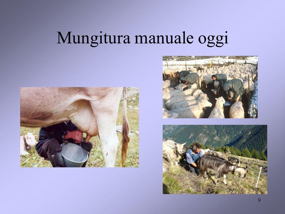60 VUOTO DI PULSAZIONE E VUOTO DI MUNGITURA Sistema a doppio vuoto indipendente (Royal) per la mungitura delle pecore.