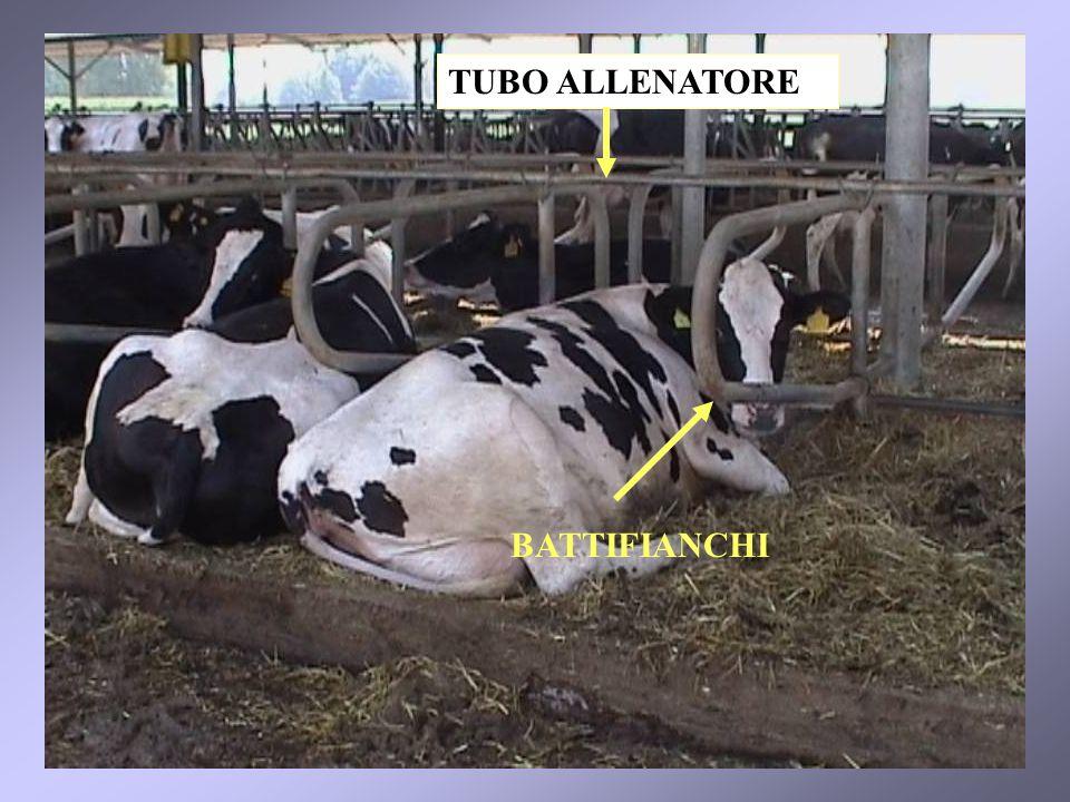 42 BATTIFIANCHI TUBO ALLENATORE