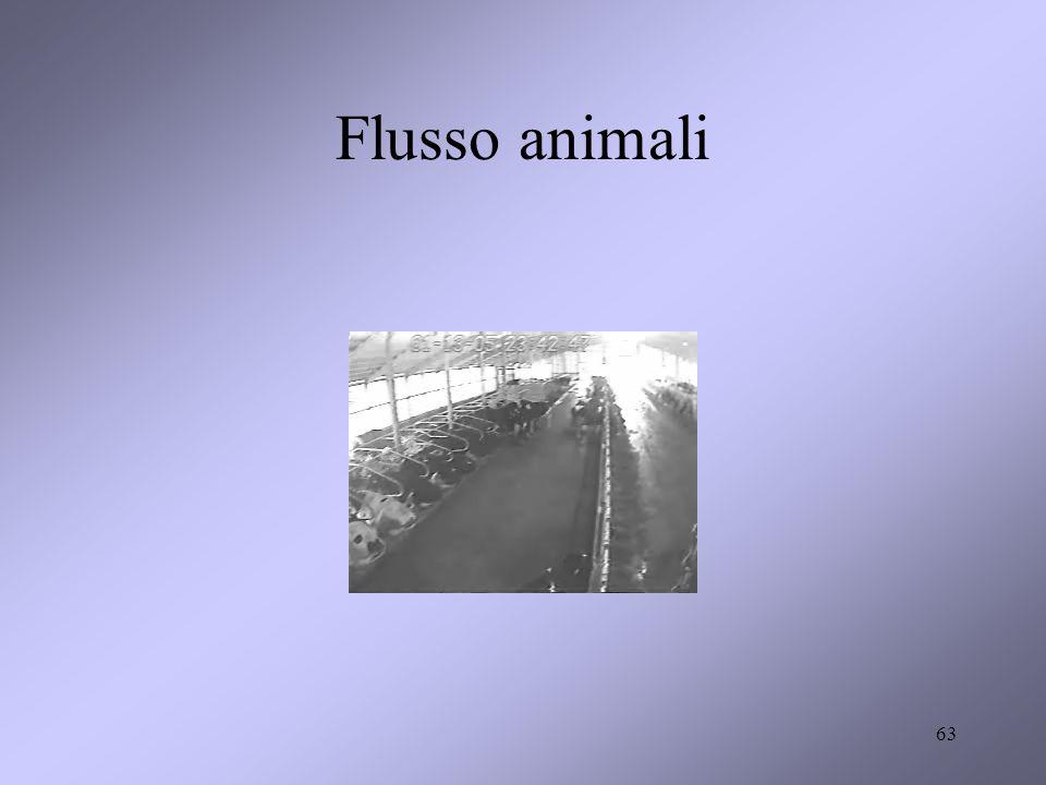 63 Flusso animali