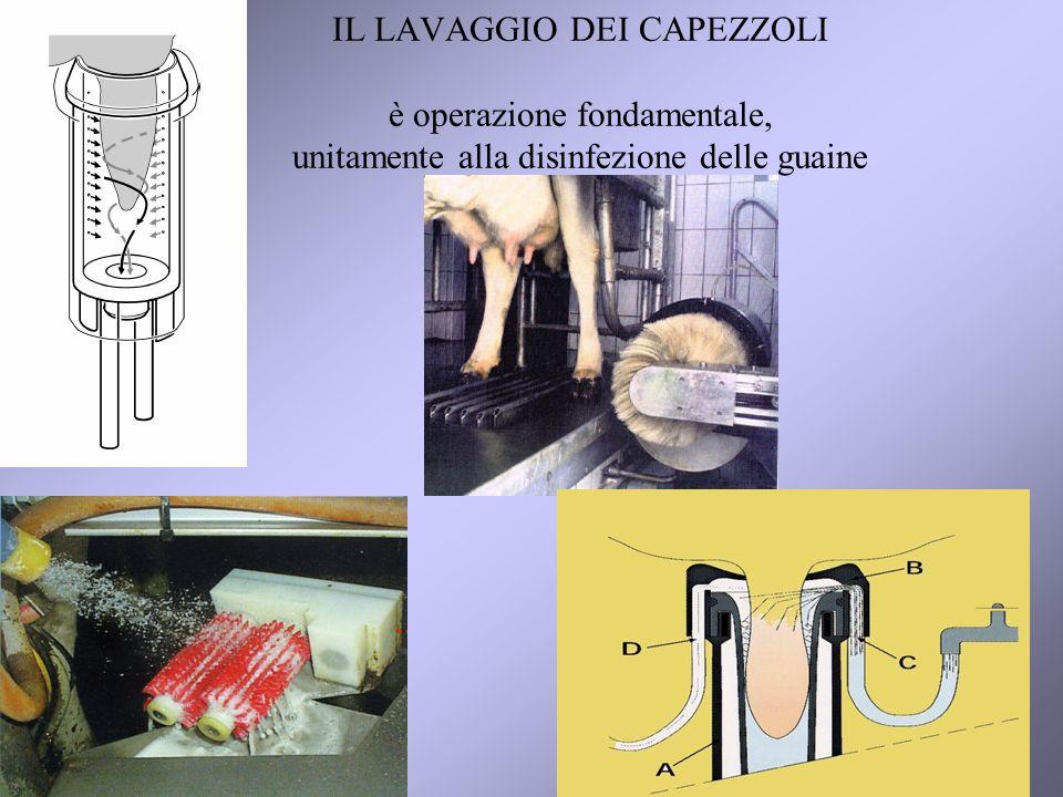 19 IL LAVAGGIO DEI CAPEZZOLI è operazione fondamentale, unitamente alla disinfezione delle guaine
