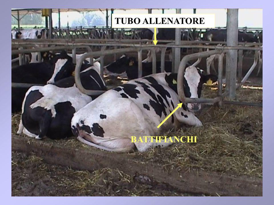 77 BATTIFIANCHI TUBO ALLENATORE