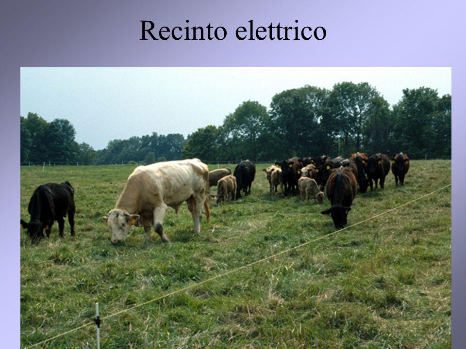 26 Recinto elettrico