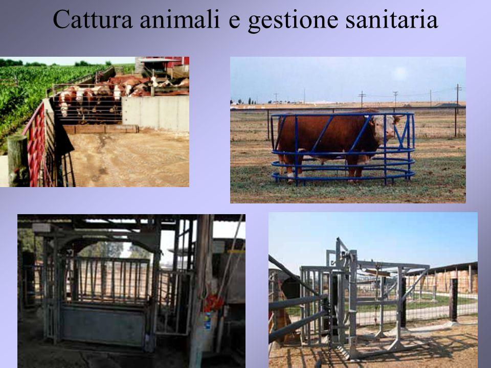 32 Cattura animali e gestione sanitaria