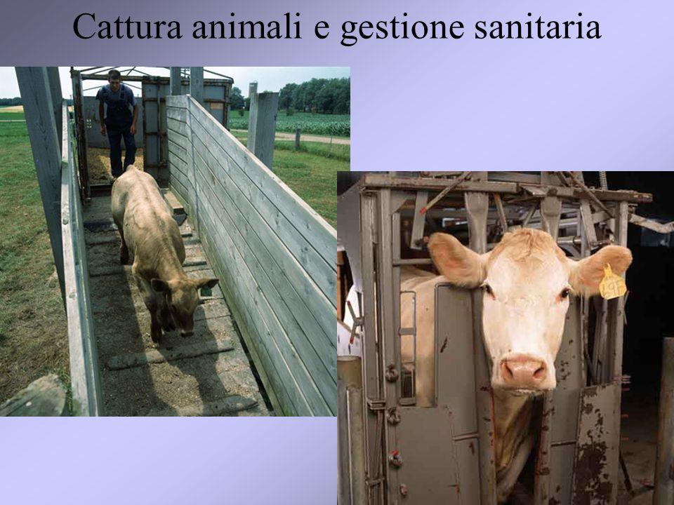 34 Cattura animali e gestione sanitaria