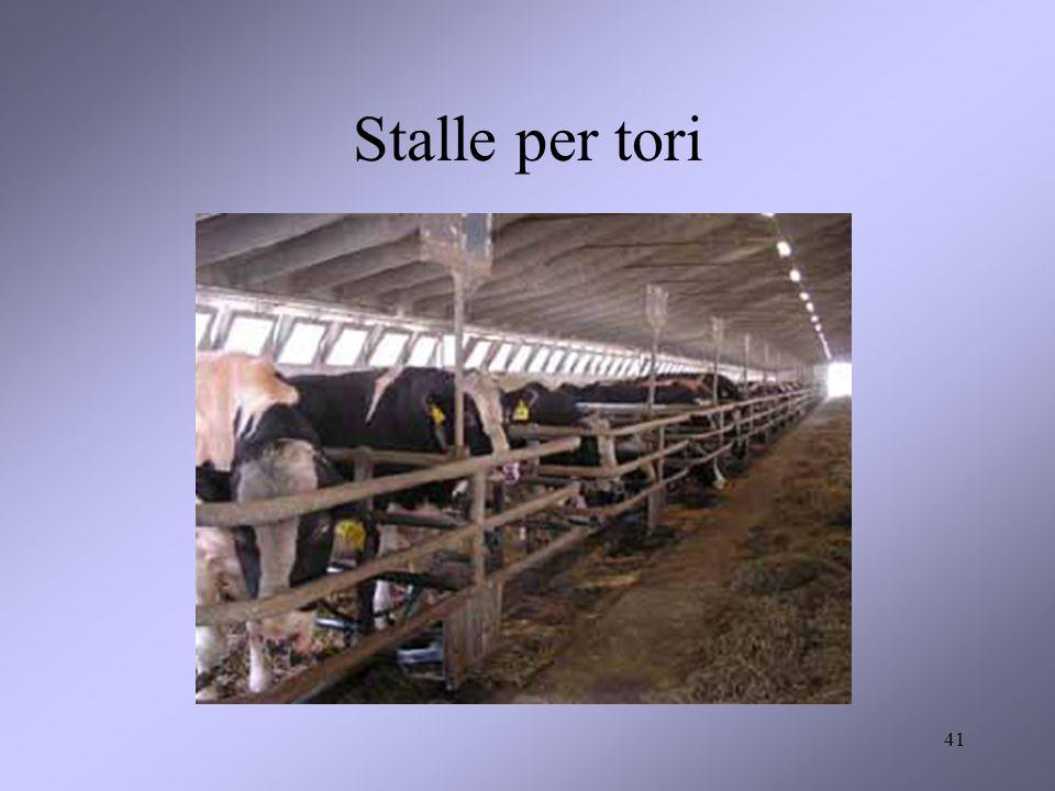 41 Stalle per tori