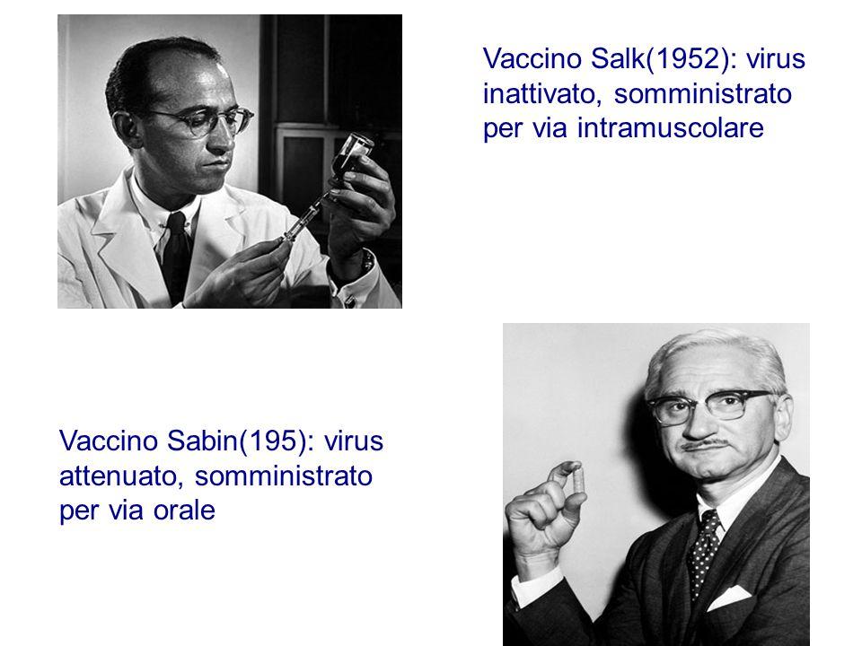 Vaccino Salk(1952): virus inattivato, somministrato per via intramuscolare Vaccino Sabin(195): virus attenuato, somministrato per via orale