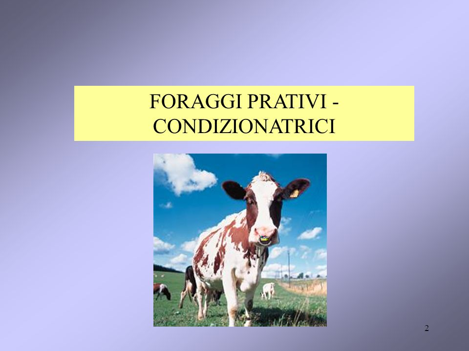 2 FORAGGI PRATIVI - CONDIZIONATRICI