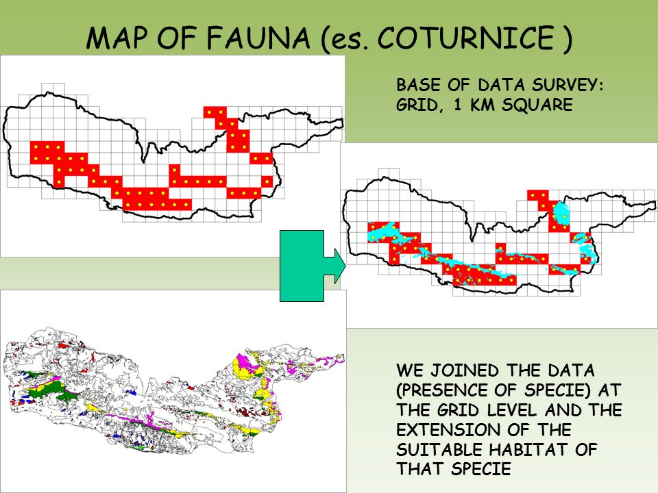 MAP OF FAUNA (es. COTURNICE ) BASE OF DATA SURVEY: GRID, 1 KM SQUARE WE JOINED THE DATA (PRESENCE OF SPECIE) AT THE GRID LEVEL AND THE EXTENSION OF TH