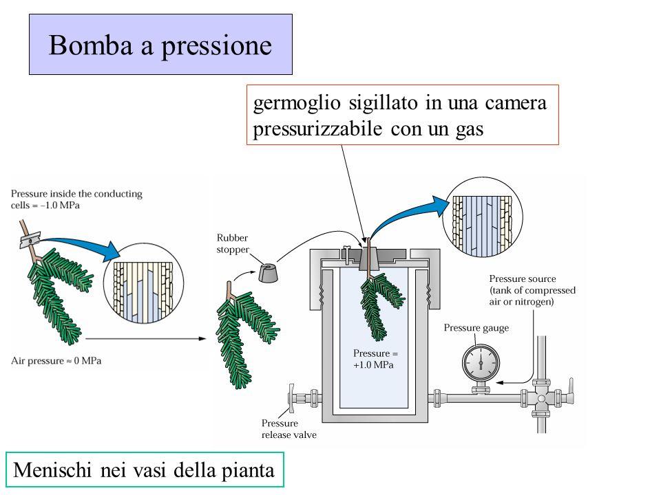 Bomba a pressione Menischi nei vasi della pianta germoglio sigillato in una camera pressurizzabile con un gas