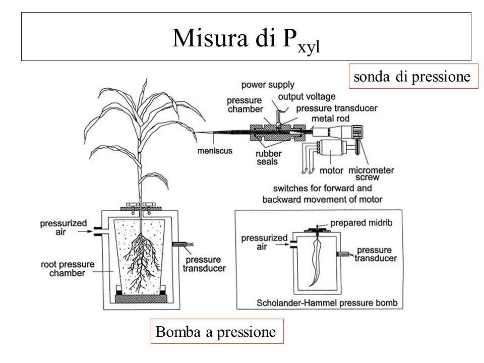Misura di P xyl sonda di pressione Bomba a pressione