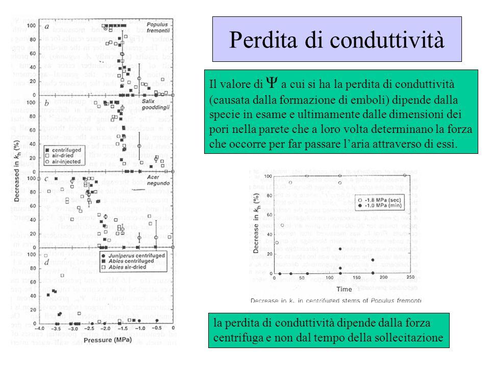 Perdita di conduttività Il valore di Ψ a cui si ha la perdita di conduttività (causata dalla formazione di emboli) dipende dalla specie in esame e ult