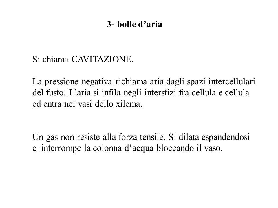 Si chiama CAVITAZIONE. La pressione negativa richiama aria dagli spazi intercellulari del fusto. Laria si infila negli interstizi fra cellula e cellul