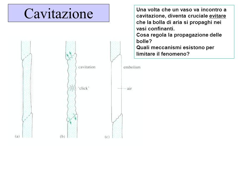 Cavitazione Una volta che un vaso va incontro a cavitazione, diventa cruciale evitare che la bolla di aria si propaghi nei vasi confinanti. Cosa regol