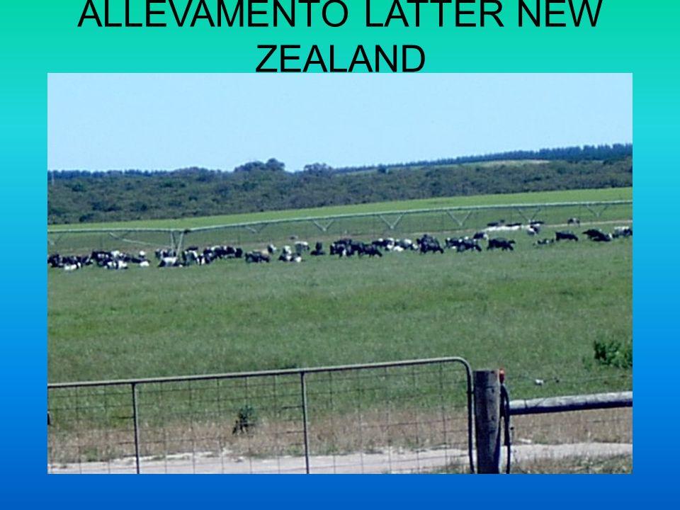 ALLEVAMENTO LATTER NEW ZEALAND