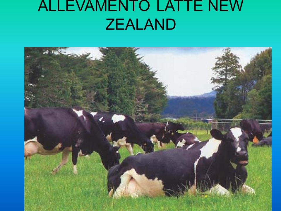 ALLEVAMENTO LATTE NEW ZEALAND