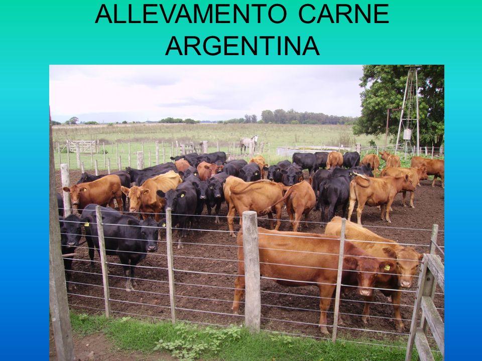 ALLEVAMENTO CARNE ARGENTINA