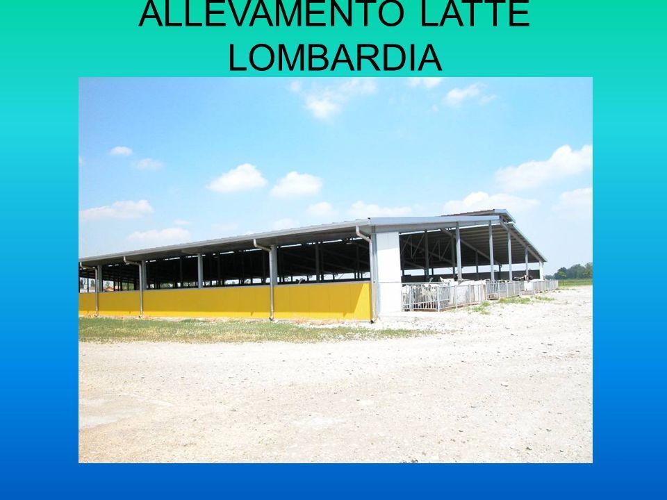 ALLEVAMENTO LATTE LOMBARDIA