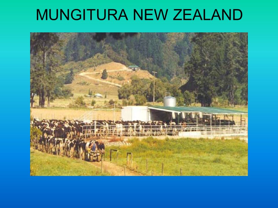 MUNGITURA NEW ZEALAND