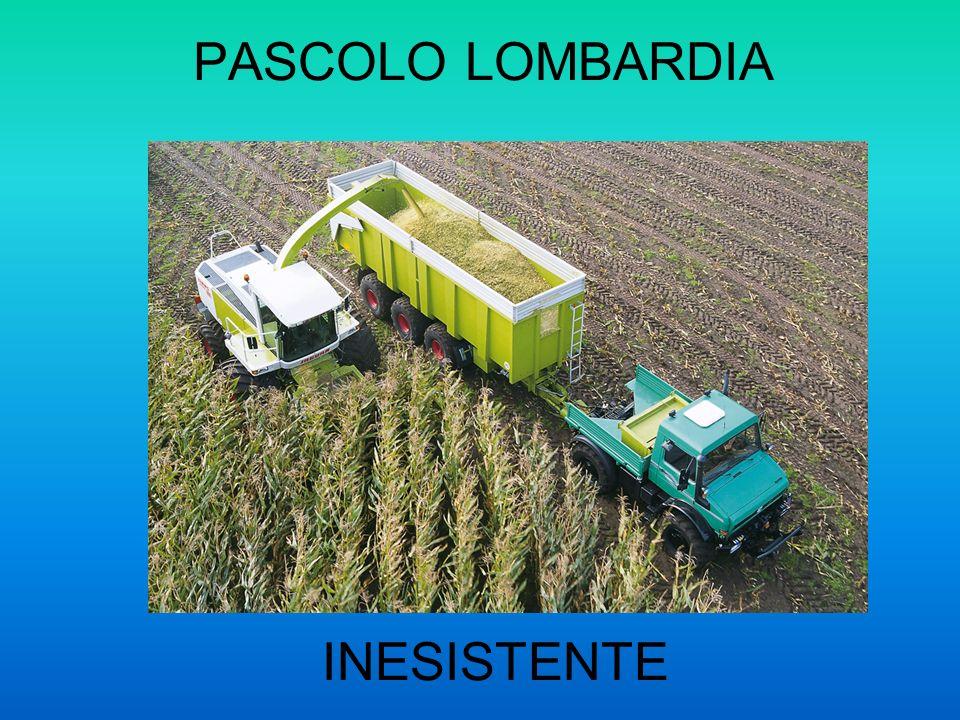 PASCOLO LOMBARDIA INESISTENTE