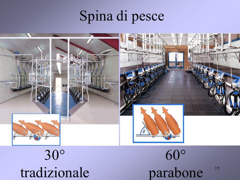 15 Spina di pesce 30° tradizionale 60° parabone