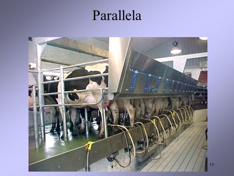 19 Parallela