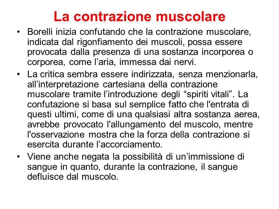 La contrazione muscolare Borelli inizia confutando che la contrazione muscolare, indicata dal rigonfiamento dei muscoli, possa essere provocata dalla