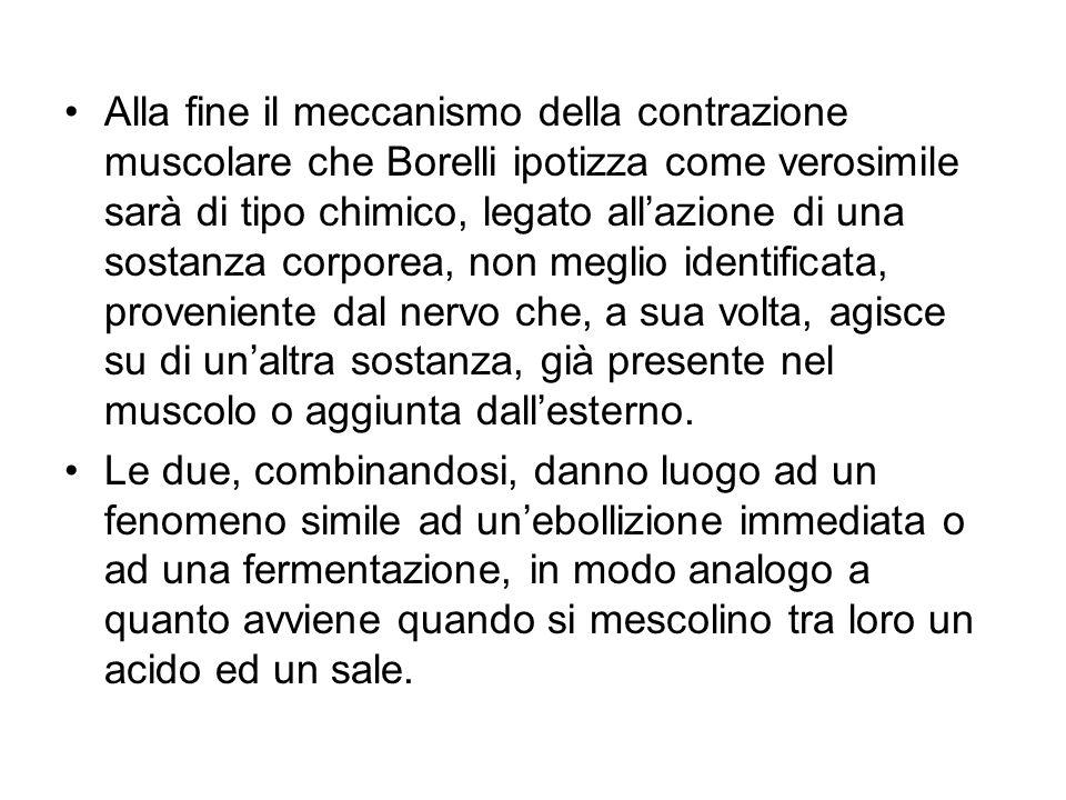 Alla fine il meccanismo della contrazione muscolare che Borelli ipotizza come verosimile sarà di tipo chimico, legato allazione di una sostanza corpor