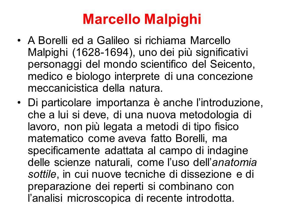 Marcello Malpighi A Borelli ed a Galileo si richiama Marcello Malpighi (1628-1694), uno dei più significativi personaggi del mondo scientifico del Sei