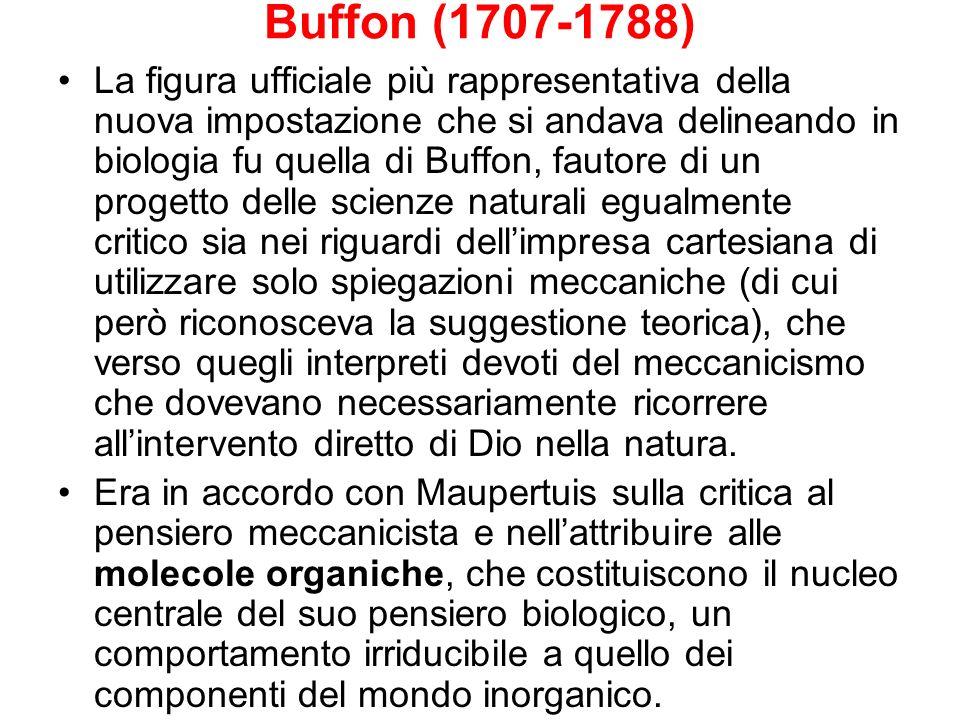 Buffon (1707-1788) La figura ufficiale più rappresentativa della nuova impostazione che si andava delineando in biologia fu quella di Buffon, fautore