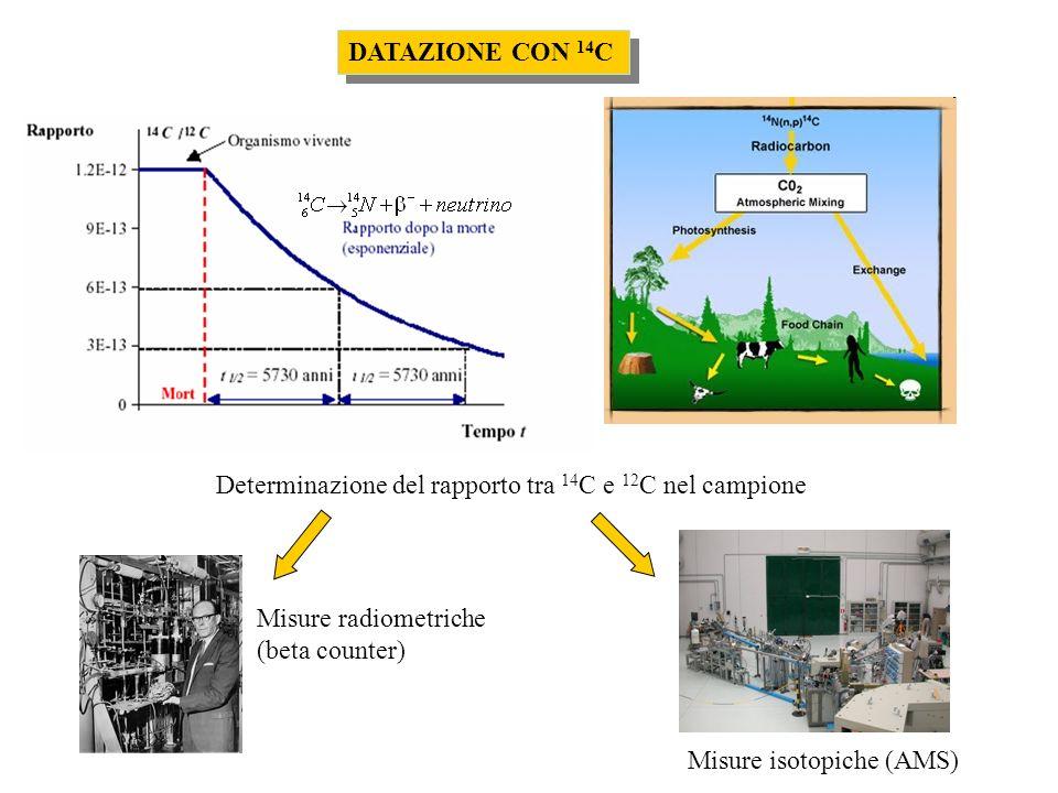 Determinazione del rapporto tra 14 C e 12 C nel campione Misure radiometriche (beta counter) Misure isotopiche (AMS) DATAZIONE CON 14 C