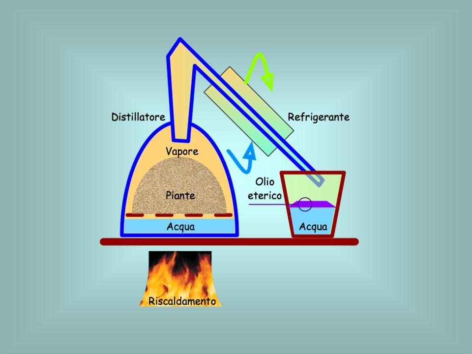 La distillazione avviene preferibilmente su pianta fresca, raccolta nel momento opportuno della giornata e nel suo tempo balsamico.