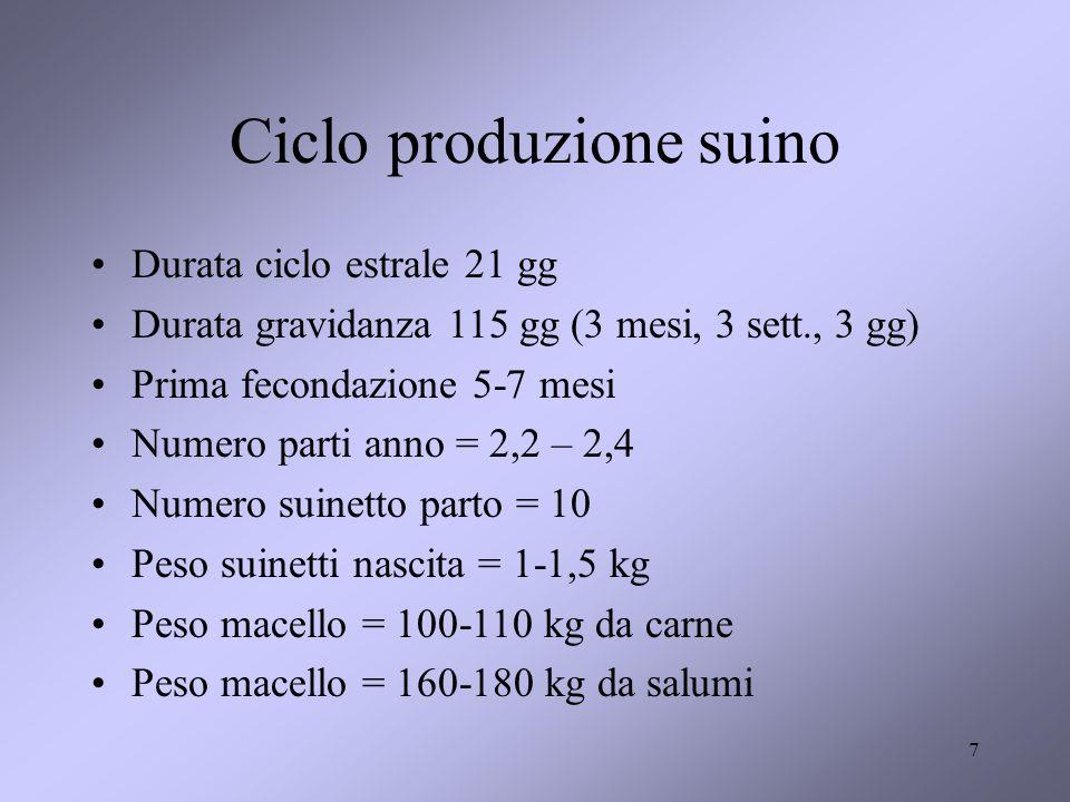 7 Ciclo produzione suino Durata ciclo estrale 21 gg Durata gravidanza 115 gg (3 mesi, 3 sett., 3 gg) Prima fecondazione 5-7 mesi Numero parti anno = 2,2 – 2,4 Numero suinetto parto = 10 Peso suinetti nascita = 1-1,5 kg Peso macello = 100-110 kg da carne Peso macello = 160-180 kg da salumi