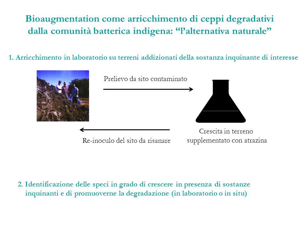 Bioaugmentation come arricchimento di ceppi degradativi dalla comunità batterica indigena: lalternativa naturale 1. Arricchimento in laboratorio su te