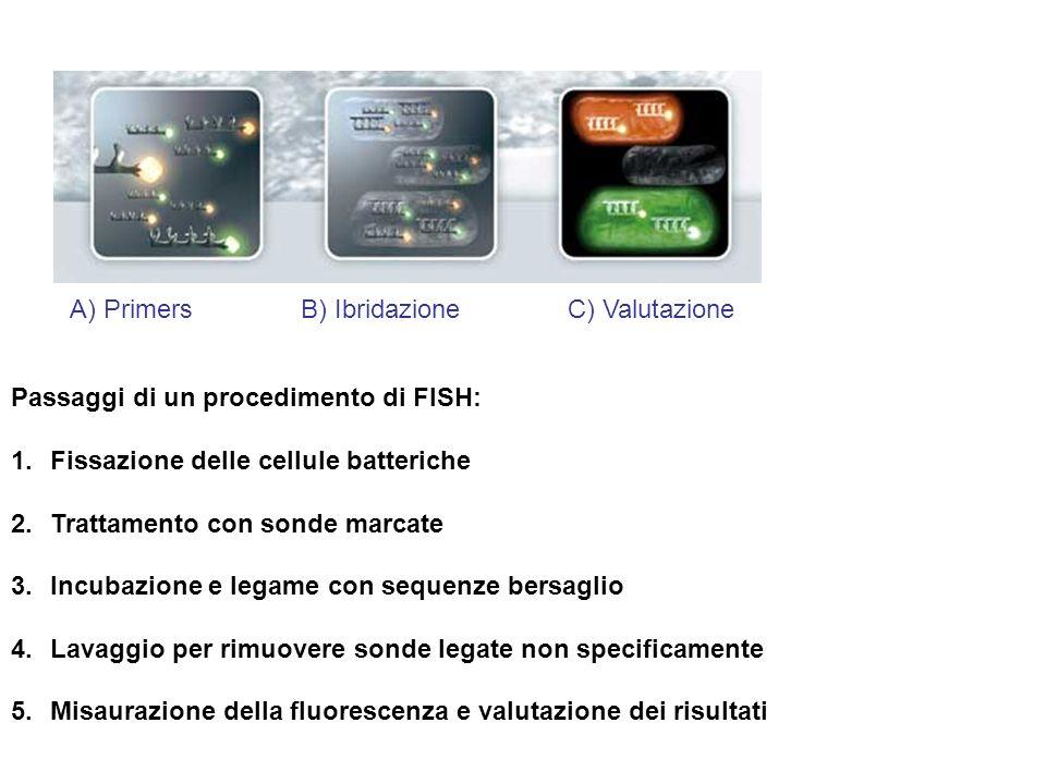 Passaggi di un procedimento di FISH: 1.Fissazione delle cellule batteriche 2.Trattamento con sonde marcate 3.Incubazione e legame con sequenze bersagl