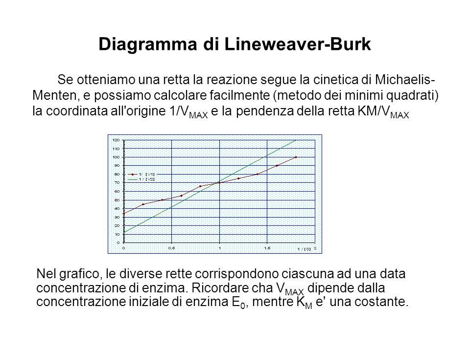 Diagramma di Lineweaver-Burk Nel grafico, le diverse rette corrispondono ciascuna ad una data concentrazione di enzima. Ricordare cha V MAX dipende da