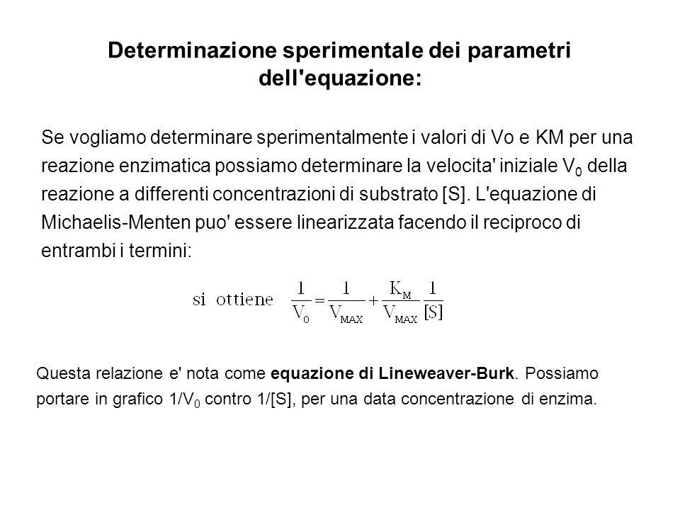 Determinazione sperimentale dei parametri dell'equazione: Se vogliamo determinare sperimentalmente i valori di Vo e KM per una reazione enzimatica pos