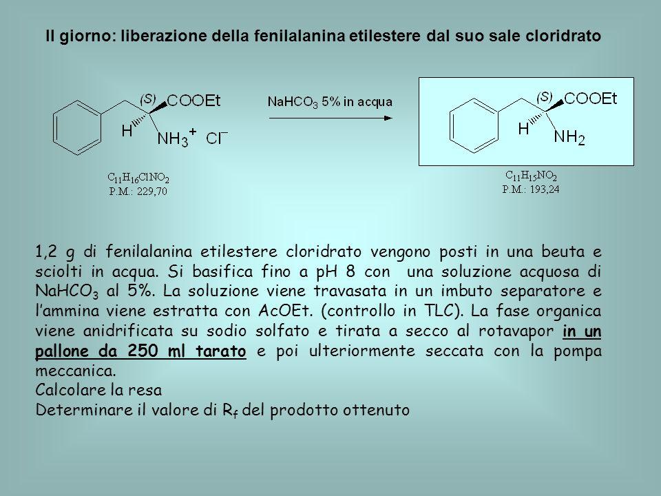 II giorno: liberazione della fenilalanina etilestere dal suo sale cloridrato 1,2 g di fenilalanina etilestere cloridrato vengono posti in una beuta e