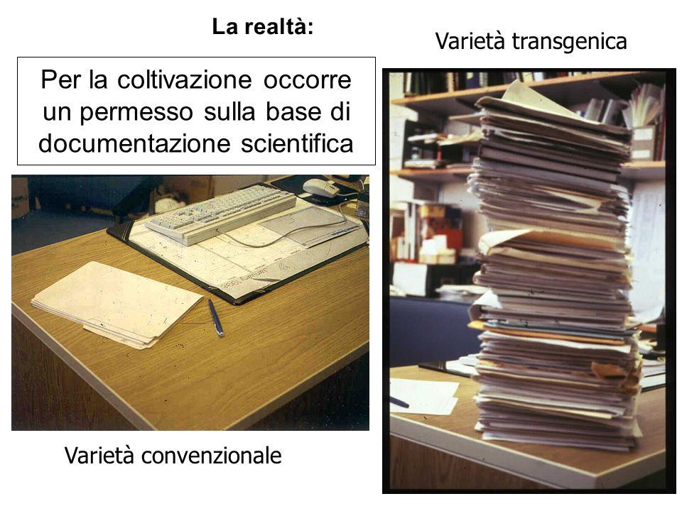 Per la coltivazione occorre un permesso sulla base di documentazione scientifica Varietà convenzionale Varietà transgenica La realtà: