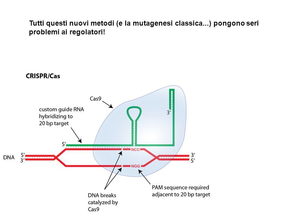 Tutti questi nuovi metodi (e la mutagenesi classica...) pongono seri problemi ai regolatori!