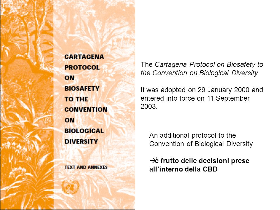 An additional protocol to the Convention of Biological Diversity è frutto delle decisioni prese allinterno della CBD The Cartagena Protocol on Biosafety to the Convention on Biological Diversity It was adopted on 29 January 2000 and entered into force on 11 September 2003.