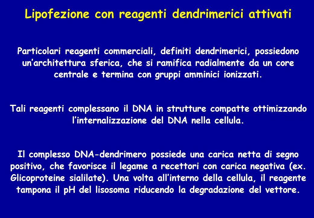 Lipofezione con reagenti dendrimerici attivati Particolari reagenti commerciali, definiti dendrimerici, possiedono unarchitettura sferica, che si rami