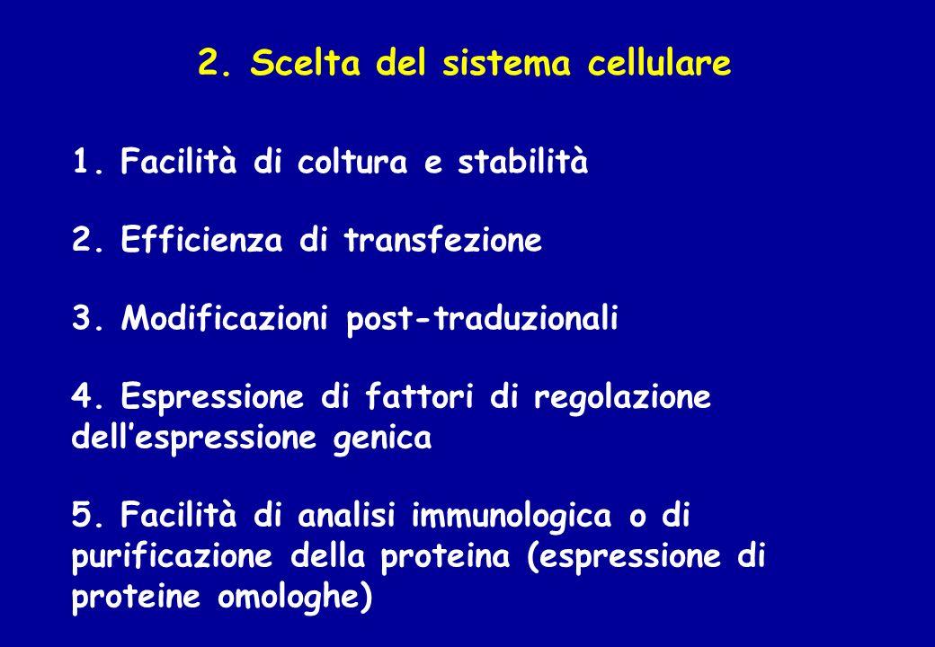 2. Scelta del sistema cellulare 2. Efficienza di transfezione 3. Modificazioni post-traduzionali 4. Espressione di fattori di regolazione dellespressi