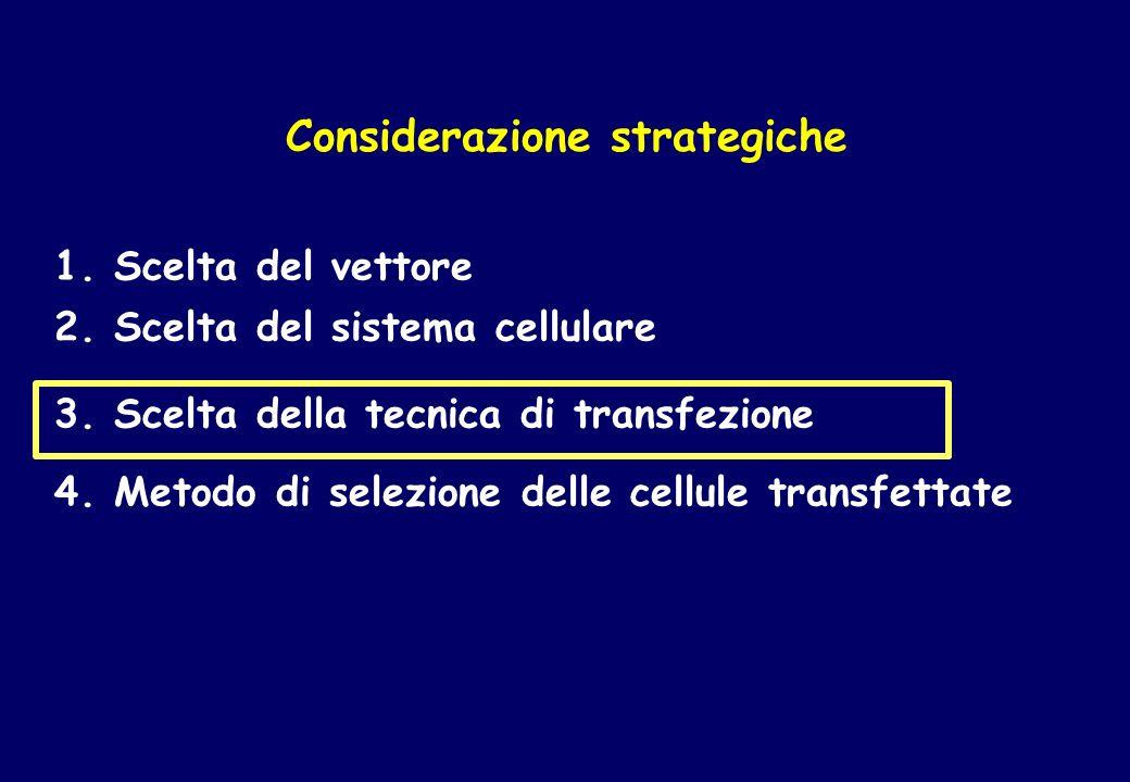 Lo studio della regolazione dellespressione genica.
