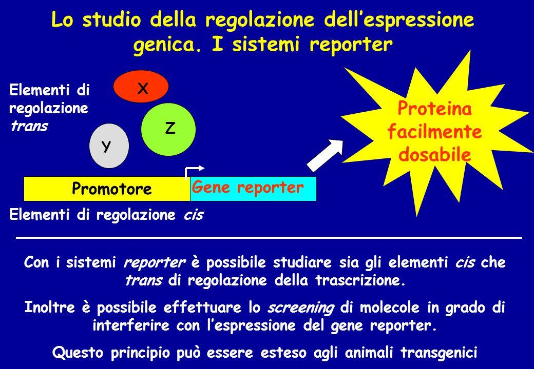 Lo studio della regolazione dellespressione genica. I sistemi reporter Con i sistemi reporter è possibile studiare sia gli elementi cis che trans di r