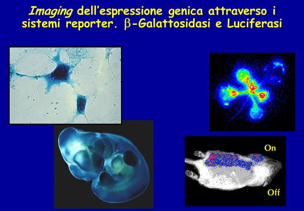 Imaging dellespressione genica attraverso i sistemi reporter. -Galattosidasi e Luciferasi