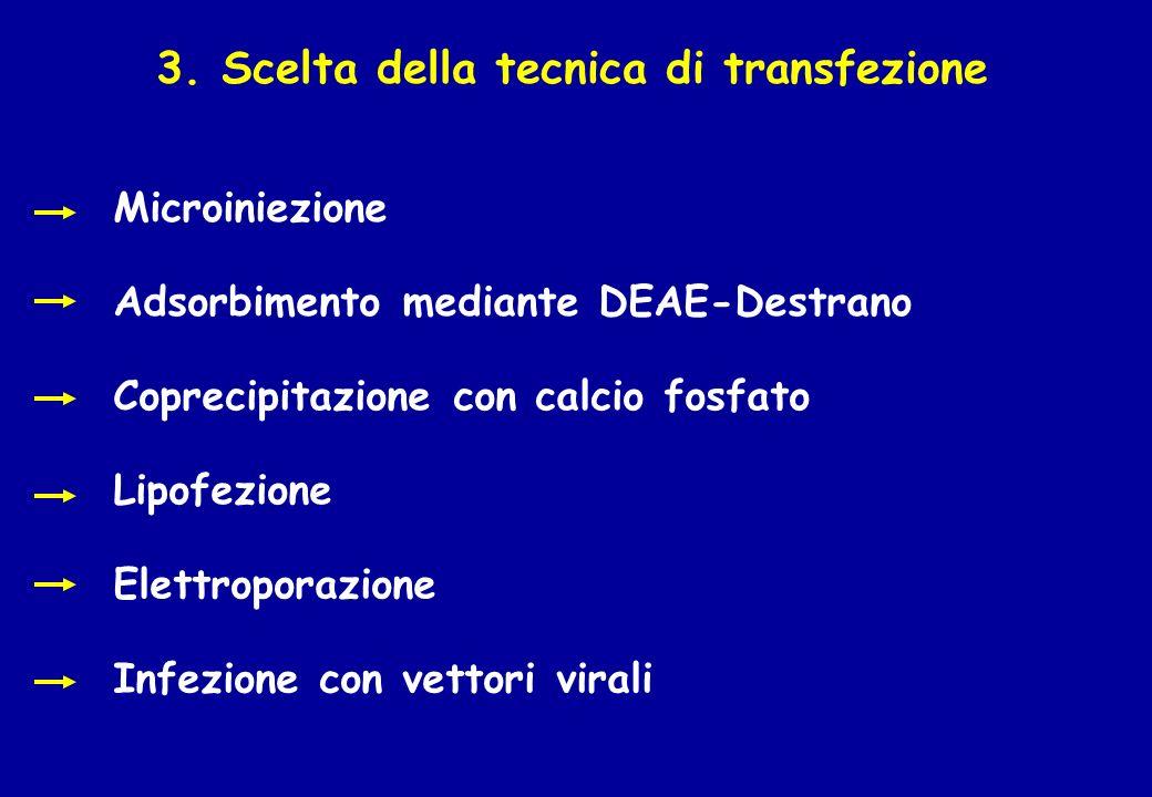 3. Scelta della tecnica di transfezione Microiniezione Adsorbimento mediante DEAE-Destrano Coprecipitazione con calcio fosfato Lipofezione Elettropora