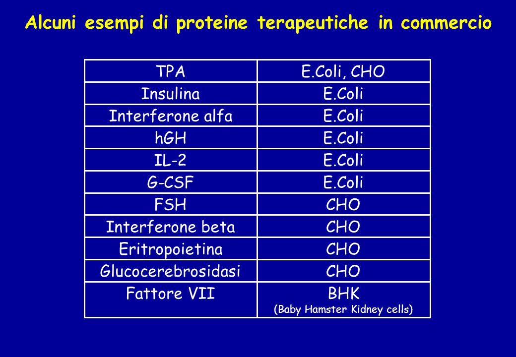 Alcuni esempi di proteine terapeutiche in commercio BHK (Baby Hamster Kidney cells) Fattore VII CHOGlucocerebrosidasi CHOEritropoietina CHOInterferone