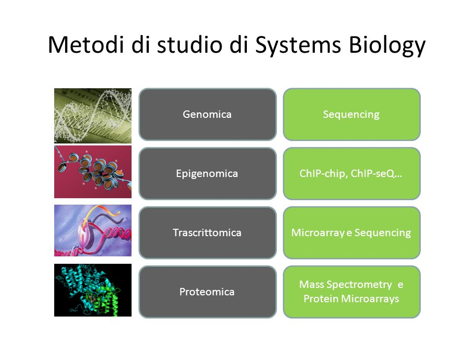 Metodi di studio di Systems Biology GenomicaSequencing EpigenomicaChIP-chip, ChIP-seQ… TrascrittomicaMicroarray e Sequencing Proteomica Mass Spectrome