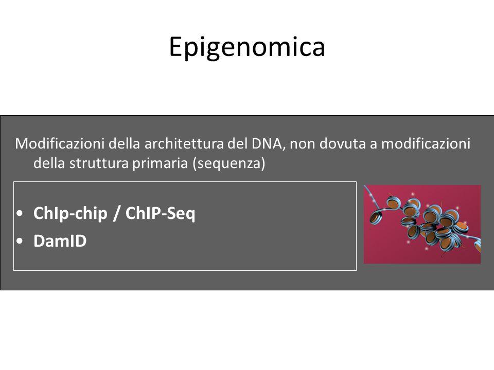 Epigenomica Modificazioni della architettura del DNA, non dovuta a modificazioni della struttura primaria (sequenza) ChIp-chip / ChIP-Seq DamID