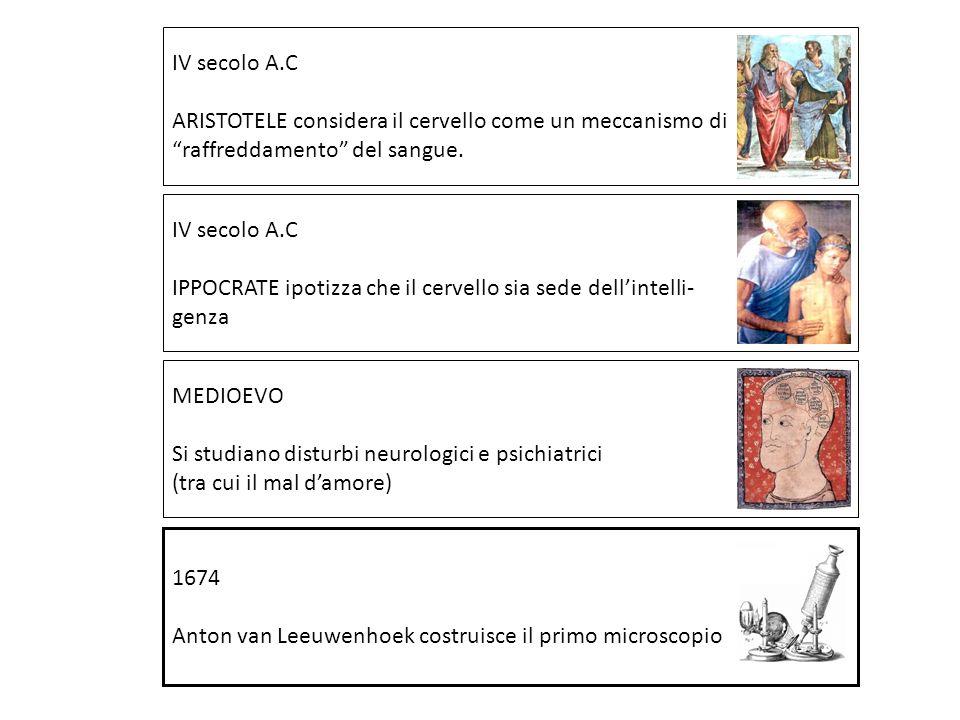 IV secolo A.C IPPOCRATE ipotizza che il cervello sia sede dellintelli- genza IV secolo A.C ARISTOTELE considera il cervello come un meccanismo di raff